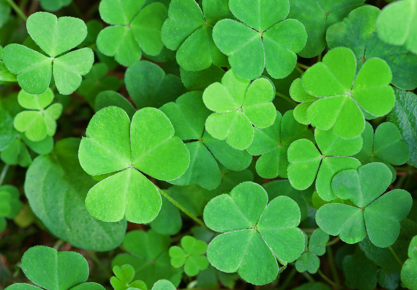Celebrate St. Patrick's Day With Local Events On The North Fork